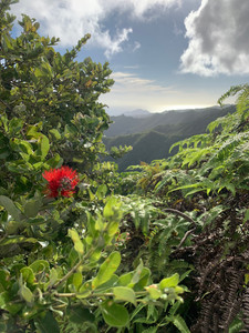 hawaii rainforest hikes