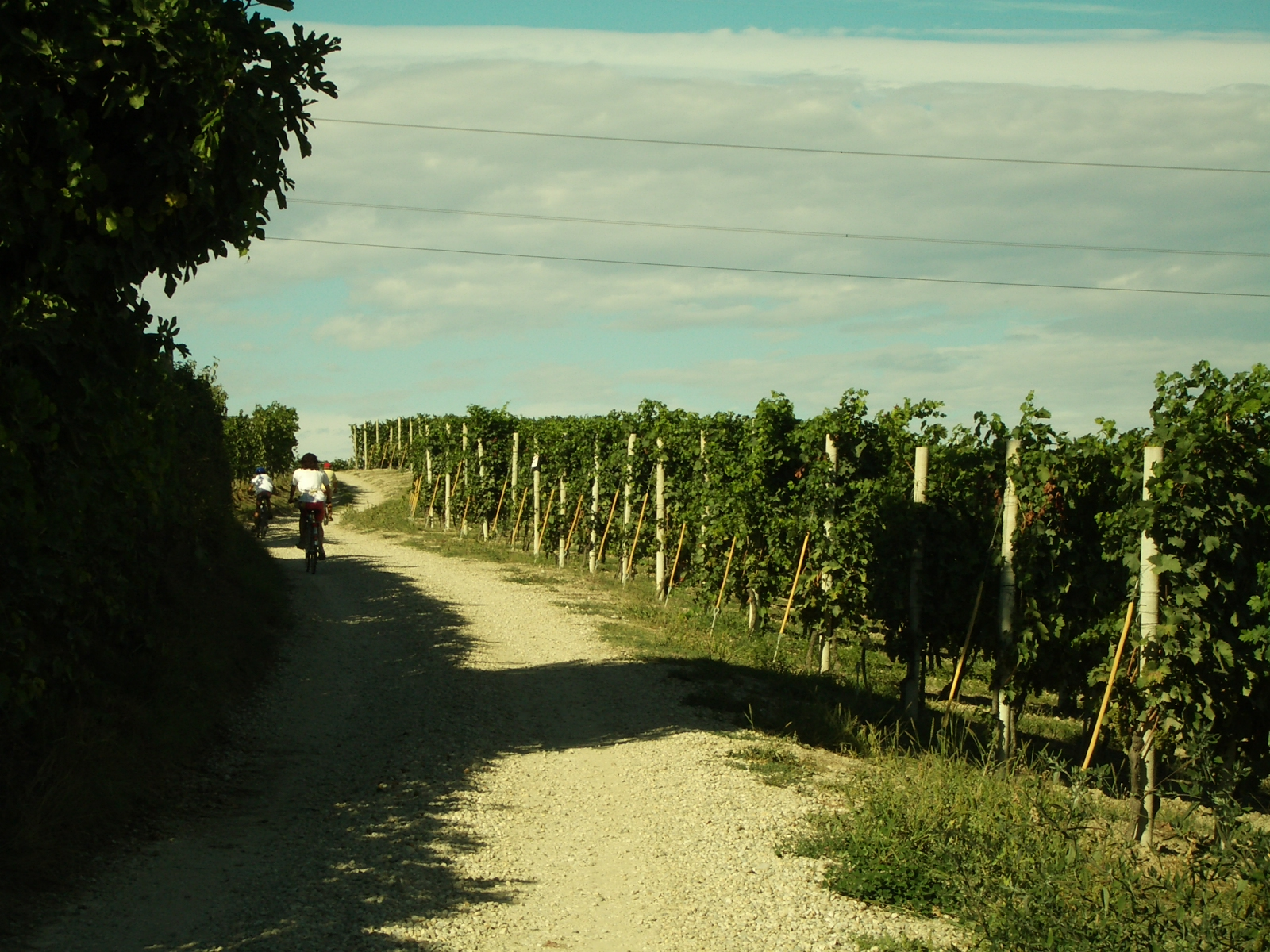 Vineyard Routes around Estate