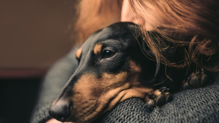 Post Pandemic Pet Care: What do I do if my pet has anxiety?