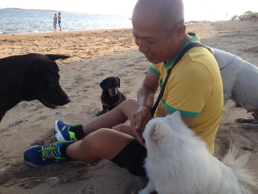 Beach dogs in Bali