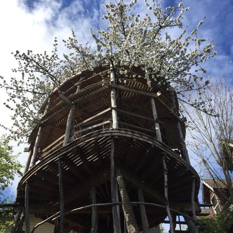 Nautilus Treehouse, Seattle