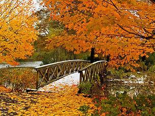 Fall Foliage 1.jpeg