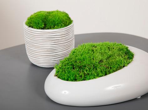 Pot stabilized natural plant spheres