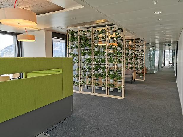 Photo d'une cloison végétale de sépration dans une entreprise