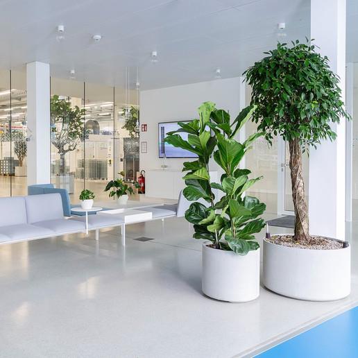 plante-verte-suisse-vegetal-tendance.jpg