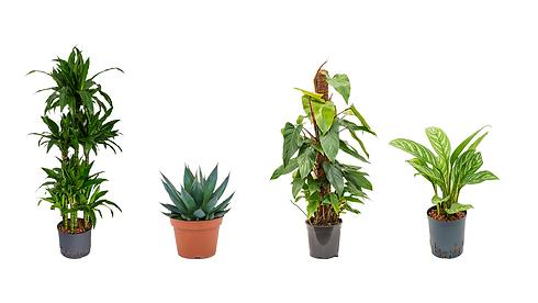 Arbres et plantes naturels