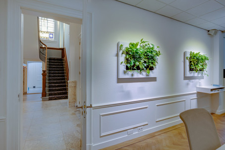 Photo of a living natural plant painting in an office in Switzerland