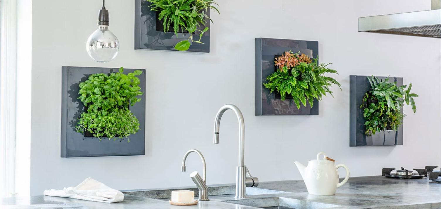 Photo d'une tableau végétal naturel vivant dans une cuisine en Suisse