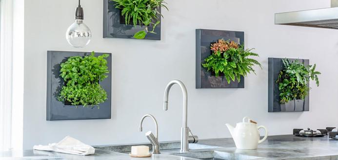 Foto einer lebenden natürlichen Pflanzenmalerei in einer Küche in der Schweiz