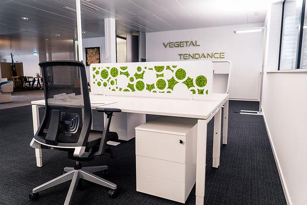 Photo d'une cloison de séparation végétal entre deux bureau