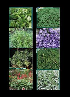 Photo de différentes plantes
