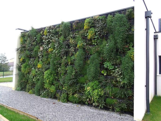 Mur végétal extérieur par Végétal Tendance