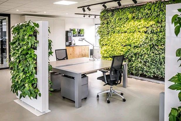 Photo d'une cloison végétale de sépration dans un bureau
