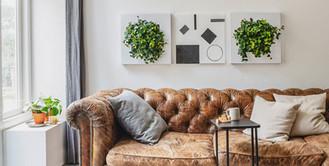 Foto einer lebenden natürlichen Pflanzenmalerei in einem Wohnzimmer in der Schweiz