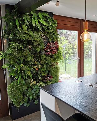 mur végétal intérieur vivant