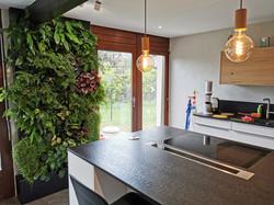 Mur végétal vivant