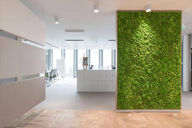 Photo d'une parroie végétale accoustique proposé par Végétal Tendance en Suisse