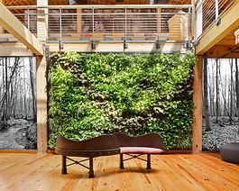 Photo d'un mur végétal conçu par Végétale tendance