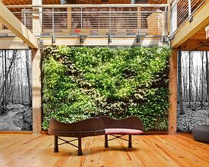 Photo d'un mur végétal
