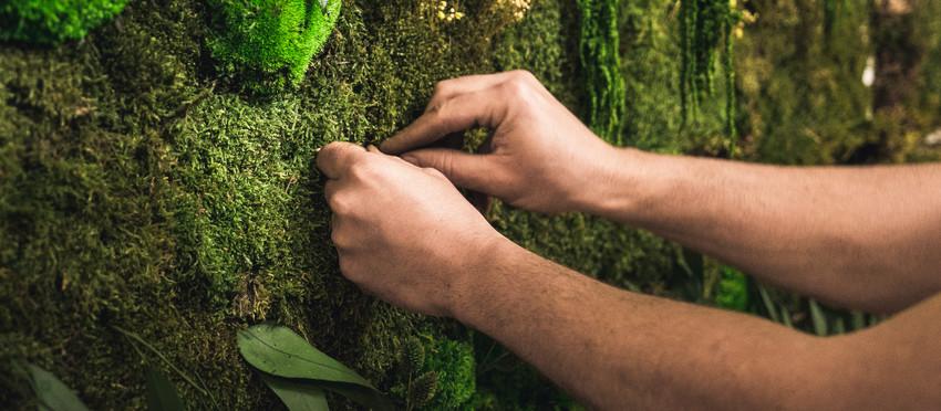 Le végétal naturel stabilisé, c'est quoi ?