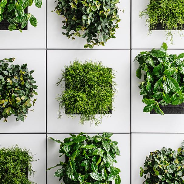 Photo d'une tableau végétal naturel vivant dans un bureau en Suisse