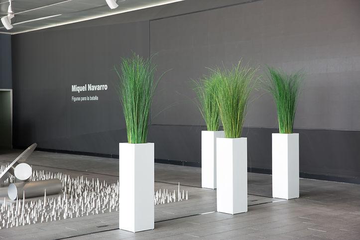 Photo de différentes plantes naturelles proposée par Végétal Tendance en Suisse1.jpg