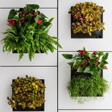 Foto eines lebenden natürlichen Pflanzengemäldes in einem Büro in der Schweiz