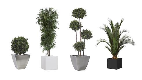 Arbres et plantes stabilisés Végétal Ten