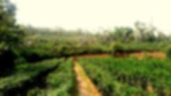Anita's Chili farmTaiwan台東辣椒農場