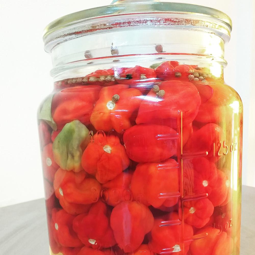 pickle chilis泡新鮮辣椒台灣台東墨西哥燈籠椒
