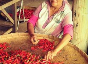 如何發酵辣椒製作泡椒、剁椒-Anita's辣食譜
