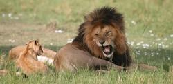 2014okt_lion16