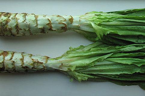 Celtuce (Asparagus Lettuce)