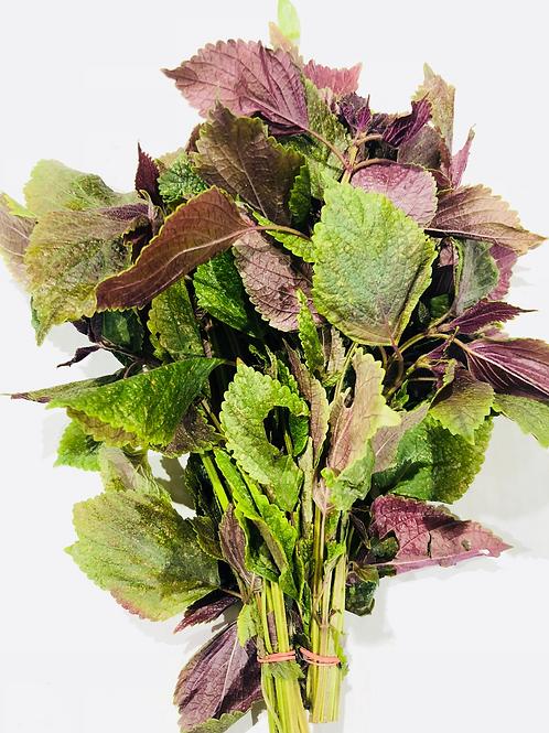 Perilla Shiso (Purple Shiso)