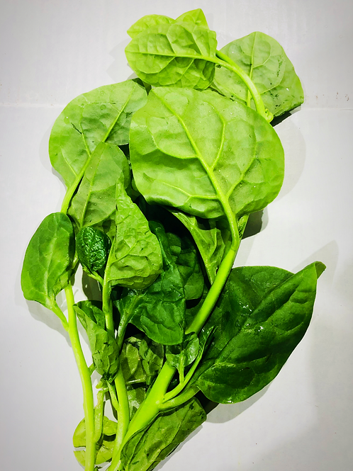 Ceylon spinach (Mong Toi)
