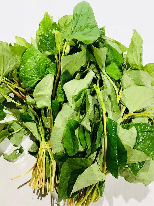 Fish Herb (Diếp Cá)