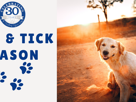 Your Pet is Itching to See Us! - Flea and Tick Prevention
