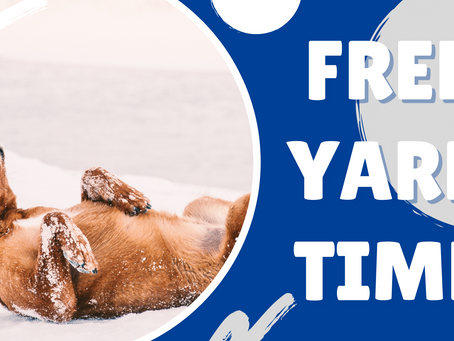 Come Have Fun with a FREE 1/2 Hour of Yard Time!