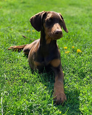 Winnie Puppy2.jpg