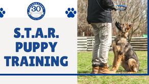 STAR Puppy Training Class!