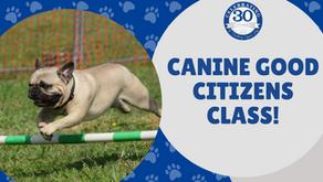Canine Good Citizens Class
