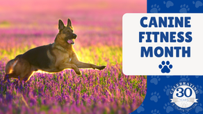 April is Canine Fitness Month!