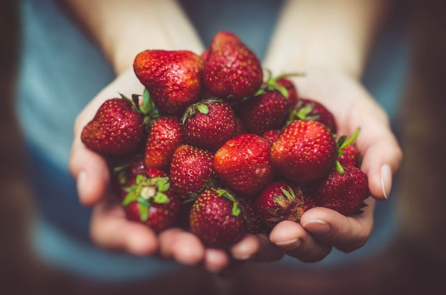 Two hands cupped like a bowl and filled with ripe strawberries.