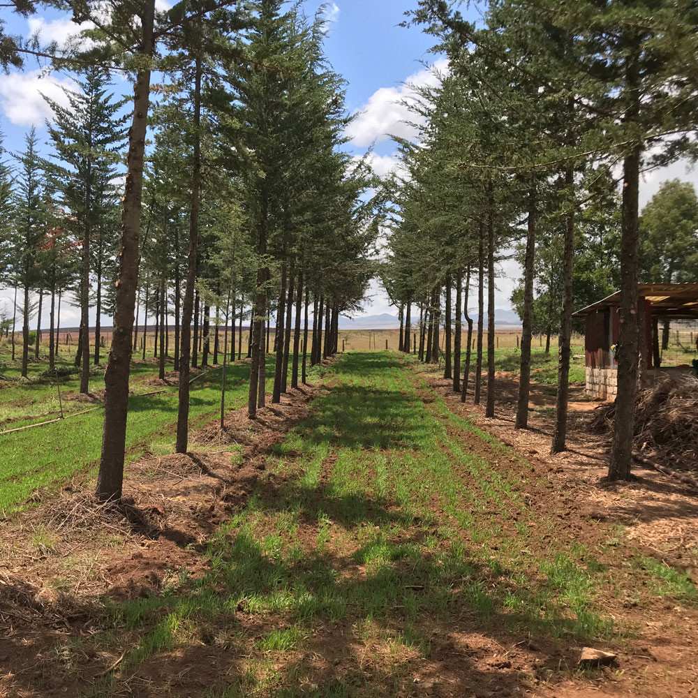 Integrated Livestock Pasture Forestry