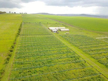 Tamalu Farm: Cultivating tomorrow