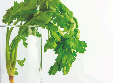 Longer Lasting Coriander | Veg Box Storage Tips