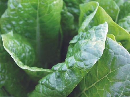 Keeping Spinach Fresh Longer | Veg Box Storage Tips