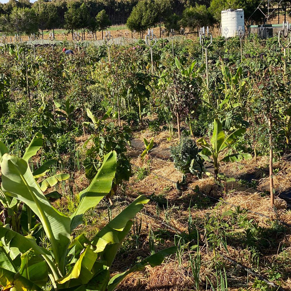 Agro Forestry | Tamalu Farm