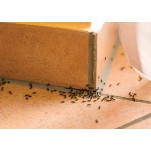 How to Control Common Spring Pests