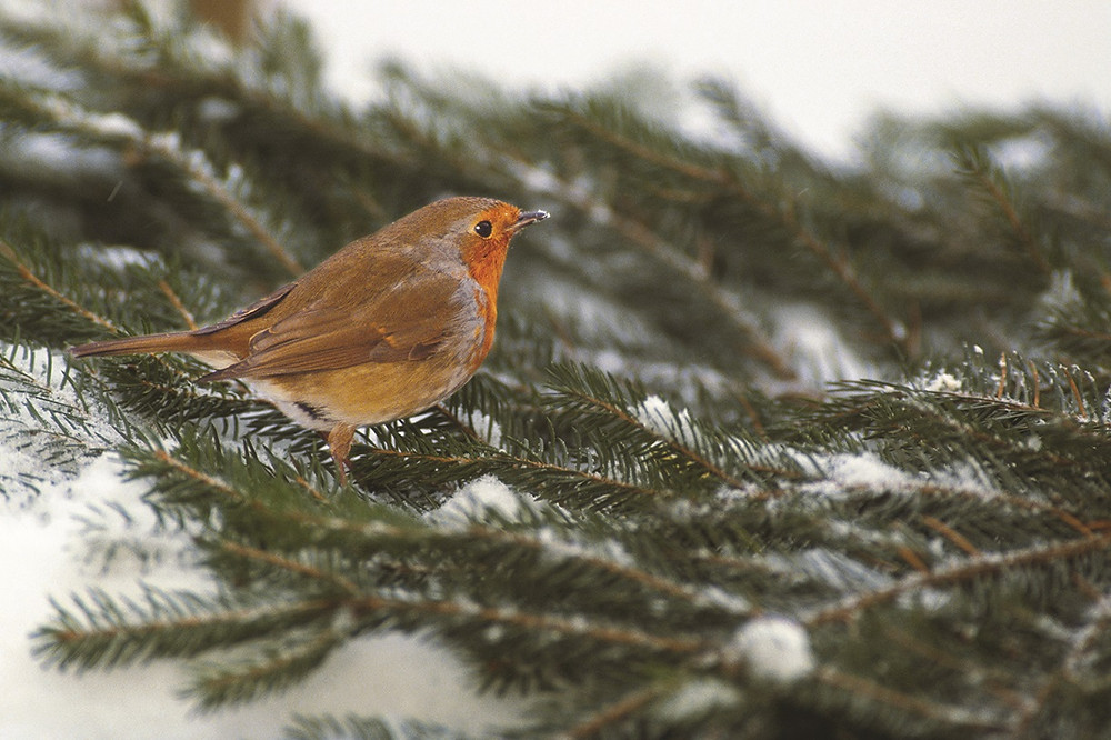 Wild birds can benefit from some help when the temperatures start to drop in winter.
